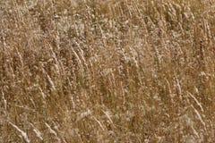 Ein ruhiger Winterschneesturm - das Gras auf dem Gebiet wird mit dem ersten Schnee bedeckt Stockfotografie