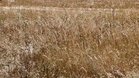 Ein ruhiger Winterschneesturm - das Gras auf dem Gebiet wird mit dem ersten Schnee bedeckt Stockfotos