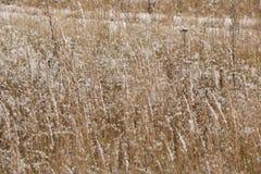 Ein ruhiger Winterschneesturm - das Gras auf dem Gebiet wird mit dem ersten Schnee bedeckt Lizenzfreie Stockfotografie