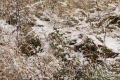 Ein ruhiger Winterschneesturm - das Gras auf dem Gebiet wird mit dem ersten Schnee bedeckt Lizenzfreies Stockfoto