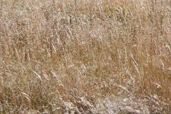 Ein ruhiger Winterschneesturm - das Gras auf dem Gebiet wird mit dem ersten Schnee bedeckt Lizenzfreies Stockbild