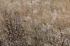 Ein ruhiger Winterschneesturm - das Gras auf dem Gebiet wird mit dem ersten Schnee bedeckt Lizenzfreie Stockfotos