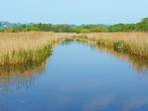 Ein ruhiges Naturreservat Stockfotografie