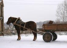 Ein russisches Grafschaftpferd Stockfoto