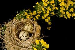 Ein rustikales Nest mit zwei Eiern Stockbilder