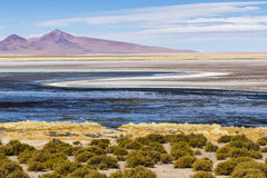 Ein Salzsee, Flamingos, Berge und Farben im Los-Flamenco-national Reserve stockfoto
