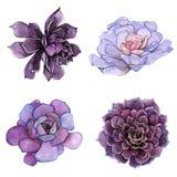 Ein Satz Aquarellzusammensetzungen gemacht von den saftigen Blumen Stockbild
