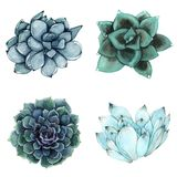 Ein Satz Aquarellzusammensetzungen gemacht von den saftigen Blumen Stockfotografie