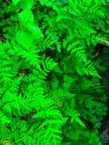ein Satz Blatt Grün und schöne Stockbild