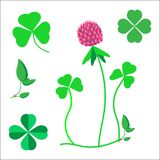 Ein Satz Kleeblätter, ein Symbol des Glücks, eine Kleeblume lizenzfreie abbildung