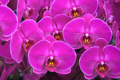 Ein Satz purpurrote Orchideen Stockbilder