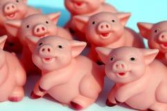 Ein Satz Schweine Stockfotos
