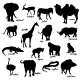 Ein Satz Tierschattenbilder Stockfotos