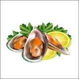 Ein Satz von den Meeresfrüchten, Miesmuscheln mit Grüns Lizenzfreie Stockbilder