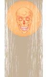 Ein Schädel auf einem grauen Hintergrund Stockfoto