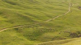 Ein Schäfer, der eine Schafherde in den Bergen von Gobustan neigt Stockfotos