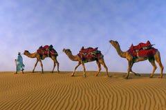 Ein Schäfer, der seine Herde von Kamelen weiden lässt lizenzfreies stockbild