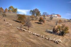 Ein Schäferhund mit seiner Schafmenge lizenzfreie stockbilder