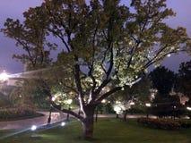 Ein schön beleuchteter Baum im Parksommer in der dunklen Zeit lizenzfreie stockfotografie