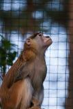 Ein schöner Affe im Zoo Stockfotos