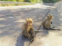 Ein schöner Affe sitzt auf der Straße im Wald lizenzfreie stockfotos