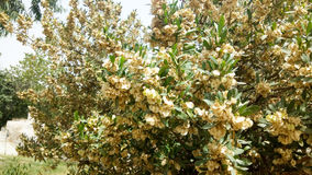 Ein schöner Baum mit Blumen Stockfoto