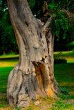 Ein schöner Baumstamm gefangen genommen Stockfoto