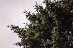 Ein schöner belaubter Baum mit grauem Himmel stockbilder
