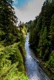 Ein schöner blauer Fluss in einem Urregen-Wald lizenzfreie stockbilder