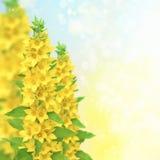 Ein schöner Blumenrand lizenzfreies stockfoto