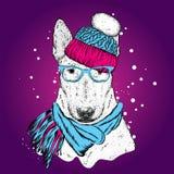 Ein schöner Bullterrier mit einem Hut und einem Winterschal Neues Jahr ` s und Weihnachten Zucht- Hund stock abbildung