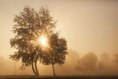 Ein schöner früher Morgen lizenzfreie stockfotos