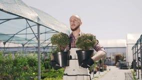 Ein schöner Gärtner mit einem Bart lächelt und hält in den Händen von Zierpflanzen Ein junger Mann benutzt Gartenwerkzeuge zu stock footage