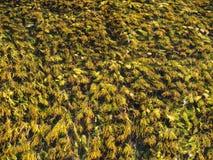 Ein schöner grüner Baum mit Crystal Clear Water, klarer Teich, Natur Jiu lizenzfreies stockbild