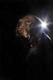Ein schöner Hund mit glühenden Entwürfen Lizenzfreie Stockfotografie