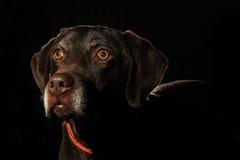 Ein schöner Hund mit glühenden Entwürfen Stockfoto