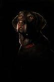 Ein schöner Hund mit glühenden Entwürfen Lizenzfreies Stockfoto