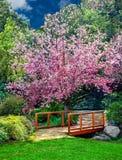 Ein schöner Kirschblütenbaum, der Schatten zu einer alten hölzernen Braut und zu einer Frühlingsernte von bunten Blumen bereitste Lizenzfreies Stockfoto