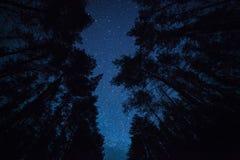 Ein schöner nächtlicher Himmel, die Milchstraße und  Bäume Lizenzfreies Stockfoto