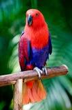 Ein schöner Papagei Lizenzfreies Stockfoto