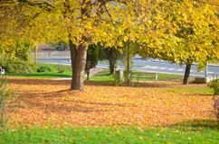 Ein schöner Park bedeckt mit Herbstlaub Stockfotografie