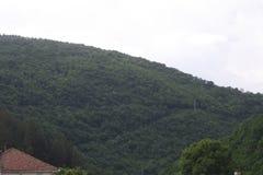 Ein schöner schöner Wald mit vielen Bäumen Stockfoto