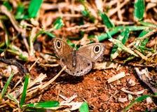 Ein schöner Schmetterling auf dem Boden Lizenzfreies Stockbild