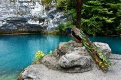 Ein schöner See Stockbilder