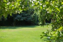 Ein schöner Sommergrünpark Der allgemeine, frische Park für die Entspannung oder Rest Sonnenaufgang in einem fantastischen Garten Stockbilder