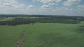 Ein schöner Sonnenuntergang über dem russischen Dorf Felder und Bäume herum Antenne und Videodreh stock video