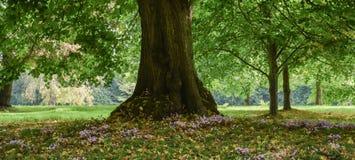 Ein schöner Waldboden Stockbilder