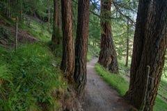 Ein schöner Waldweg stockfotos