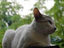 Ein schönes Bild eines weißen Katzensitzens Stockfotos