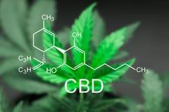 Ein schönes Blatt des Hanfmarihuanas im defocus mit dem Bild der Formel CBD stockfotografie